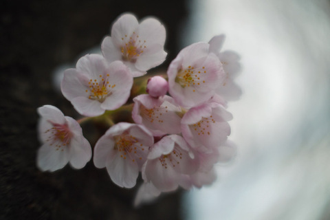 2011411blog_3
