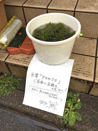 2017402hitori_2